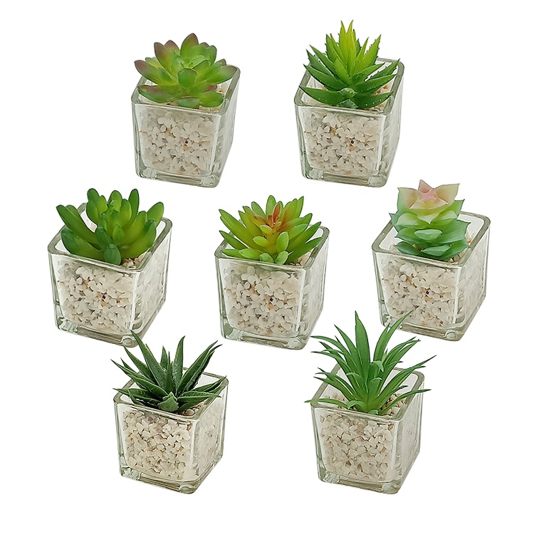 Small Glass Cube artificial succulent mini potted succulent faux plant set